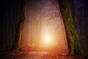 Path_nature-3151869_1280